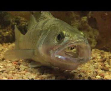 ryba ve vodě