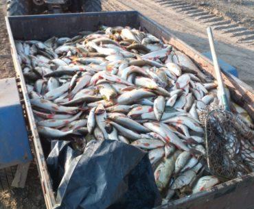 mrtvé ryby