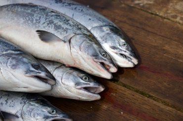 maso losos